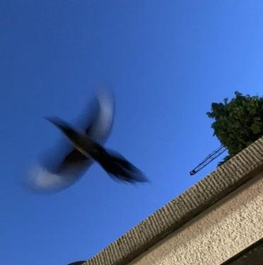 Vogelrettung_4